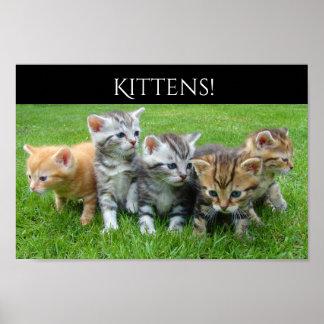 Cinco gatitos mimosos póster