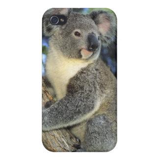 Cinereus de la koala, del Phascolarctos), Australi iPhone 4 Cárcasa