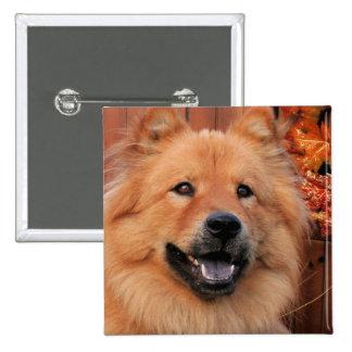 Cinny - perro chino de perro chino Photo-12 Pin