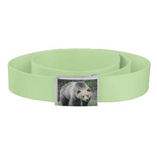 Cinturón Oso grizzly de Brown que camina en las maderas