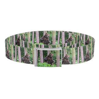 Cinturón Oso grizzly que se coloca alto en las maderas