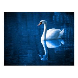 Cisne blanco bonito que flota en un lago azul postal