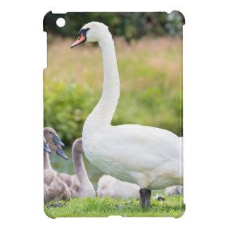 Cisne blanco de la madre con los polluelos jovenes