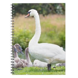 Cisne blanco de la madre con los polluelos jovenes cuaderno