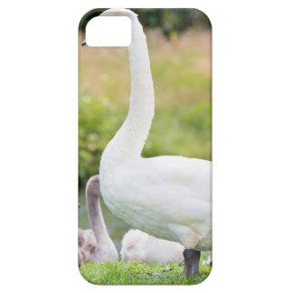 Cisne blanco de la madre con los polluelos jovenes funda para iPhone SE/5/5s