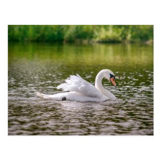 Cisne blanco en un lago postal