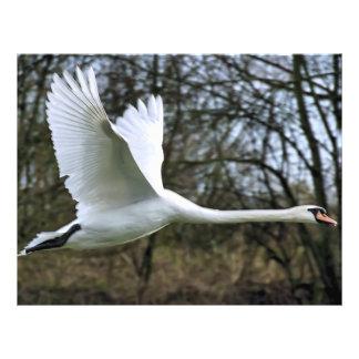 Cisne blanco en vuelo completo folleto 21,6 x 28 cm