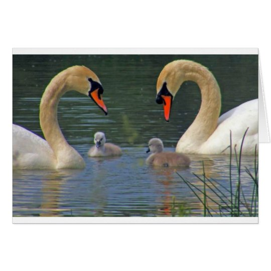 Cisne Cherie precioso Tarjeta De Felicitación