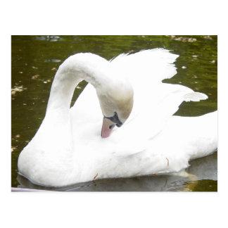 Cisne del lago postal