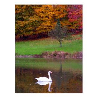 Cisne en otoño postal