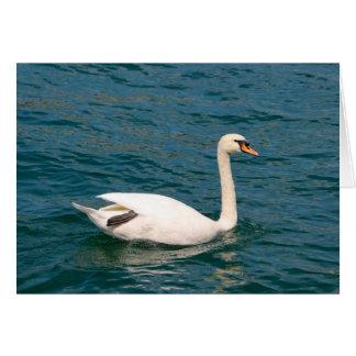Cisne en Suiza Tarjeta Pequeña