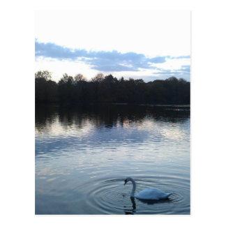 Cisne en un lago postal