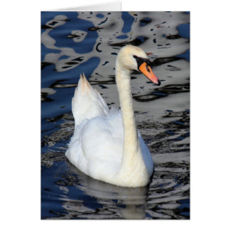 Cisne en un lago tarjeta de felicitación