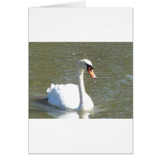 Cisne Felicitacion