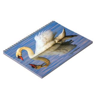 Cisne mudo, olor del cygnus cuaderno
