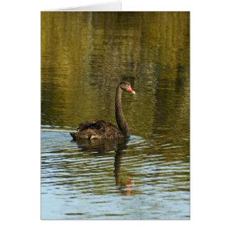 Cisne negro felicitacion