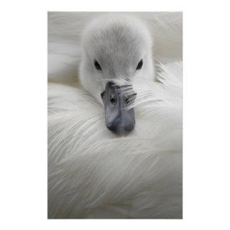 Cisne, plumas blancas hermosas, comodidad de la be folleto 14 x 21,6 cm