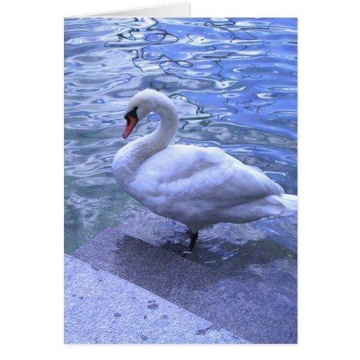 Cisne suizo tarjeta