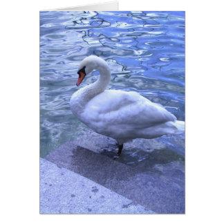 Cisne suizo tarjeta de felicitación
