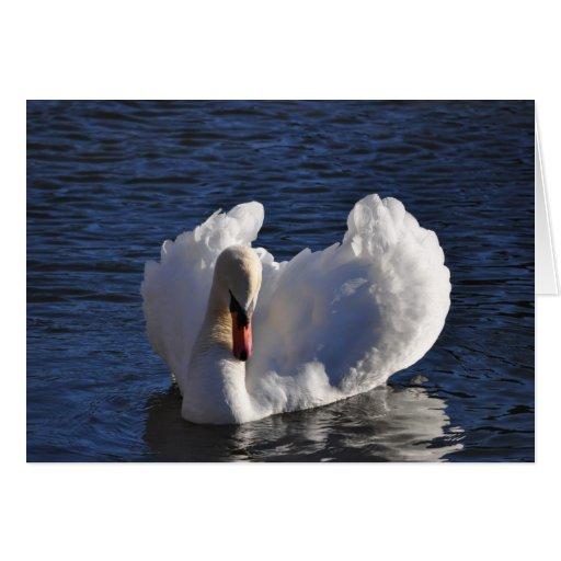 Cisne Felicitaciones