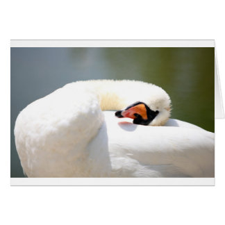 cisne tarjeton