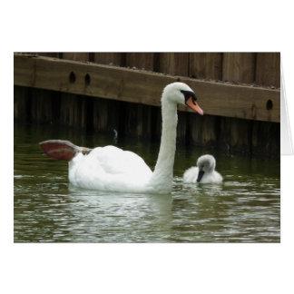 Cisne y pollo del cisne tarjeta