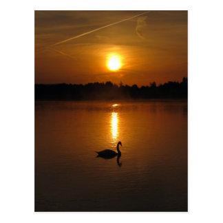 Cisne y puesta del sol postal
