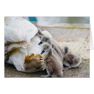 Cisne y sus bebés tarjeta de felicitación