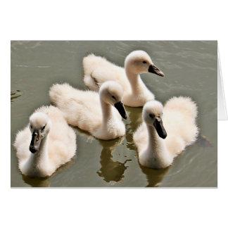 Cisnes del bebé que nadan tarjeta de felicitación