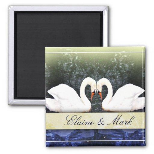 Cisnes elegantes en amor iman