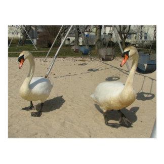 Cisnes en el patio postal