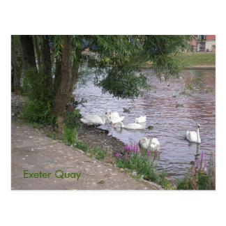 Cisnes en Exeter Quay Postal