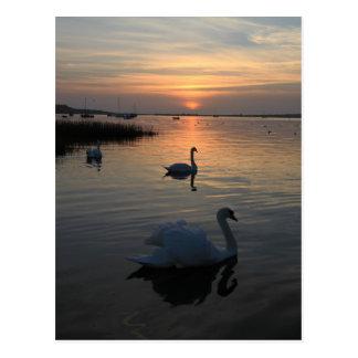 Cisnes en la puesta del sol postal