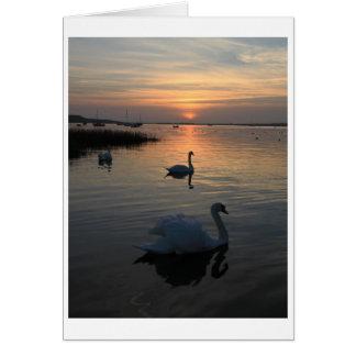 Cisnes en la puesta del sol tarjeta de felicitación