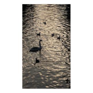Cisnes en pequeña tarjeta de la foto del lago tarjetas de visita