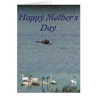Cisnes felices del día de madre que saludan tarjeta de felicitación