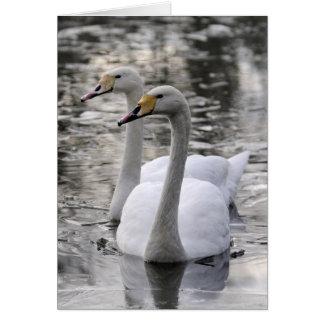Cisnes junto tarjeta de felicitación
