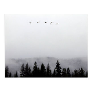 """Cisnes que vuelan arriba "" Postal"
