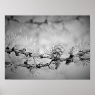 CK y flor blanco del alerce Póster