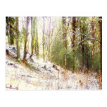 Claro Sunlit #2 del bosque Nevado Tarjetas Postales