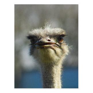 Close_Up_Ostrich_FullSize.jpg Postal