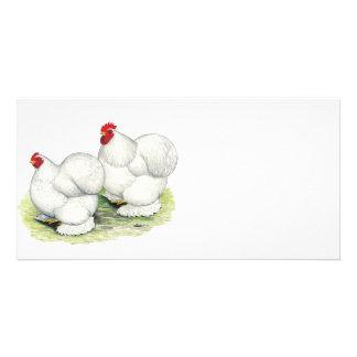 Cochin:  Gallos blancos Tarjetas Personales Con Fotos