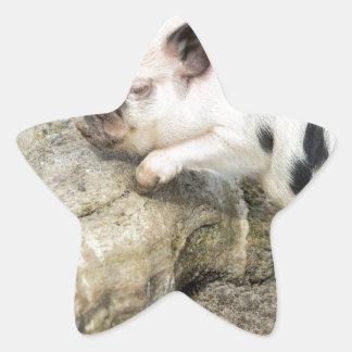 Cochinillo blanco y negro joven en el tronco de pegatina en forma de estrella