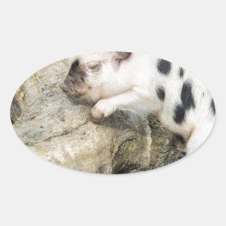 Cochinillo blanco y negro joven en el tronco de pegatina ovalada