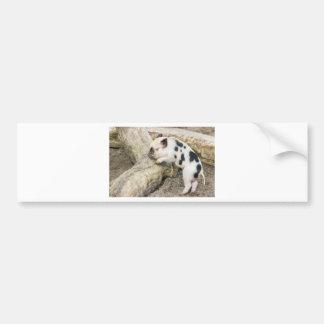 Cochinillo blanco y negro joven en el tronco de pegatina para coche