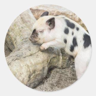 Cochinillo blanco y negro joven en el tronco de pegatina redonda