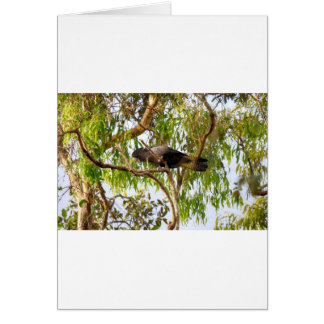 COCKATOO NEGRO QUEENSLAND RURAL AUSTRALIA TARJETA