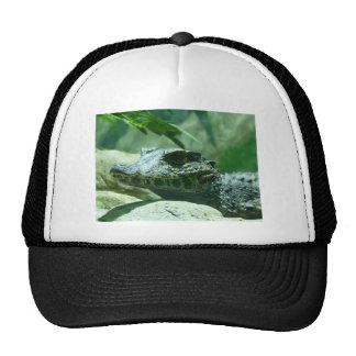 cocodrilo caiman gorros bordados