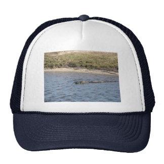 Cocodrilo en el gorra del agua