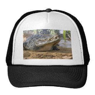 cocodrilo gorra